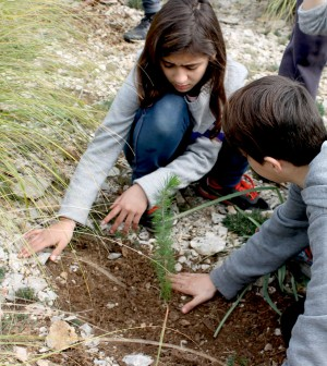 actividad-reforestacion
