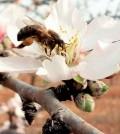 avispa-asiatica-mallorca