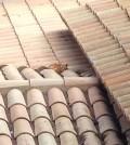Fotoqueja gatito magaluf