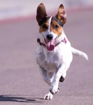 perros-port-adriano