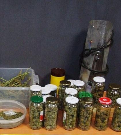 Registran su casa por un robo y descubren una plantación de marihuana