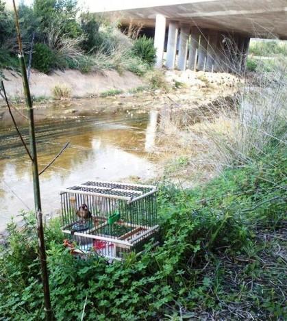 Sorprenden a un cazador ilegal en las inmediaciones del torrente de Santa Ponça